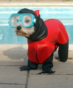 These Animals are ready for the summer – 17 PHOTOS