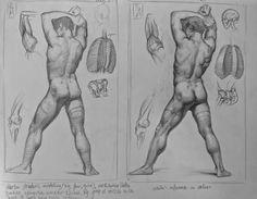 Dibujo Anatómico de la Figura Humana » Academia de Arte de Barcelona