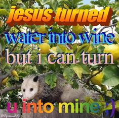 Cute Memes, Stupid Funny Memes, Funny Relatable Memes, Dankest Memes, Meme Pictures, Reaction Pictures, Response Memes, Opossum, All The Things Meme