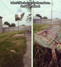 Jon and I need to do this with our gecko so we can take her out in the yard without constantly fallowing her!
