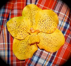 Yellow Spotted Wild Exotic Yellow Orchid Hair Flower by EllieBeas, $5.95