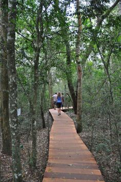 Trilha em passarelas de madeira na mata do P.N do Iguaçu (Foz do Iguaçu - PR)
