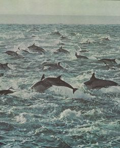 diving dolphins!