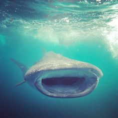 Great whale shark photo from @Tristen Seal Synan on Instagram