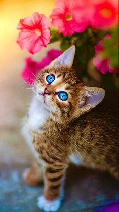 Cute Cats And Kittens, Baby Cats, I Love Cats, Kittens Cutest, Pretty Cats, Beautiful Cats, Animals Beautiful, Cute Baby Animals, Animals And Pets