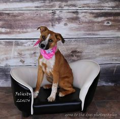 09/02/15-Meet MACEY GRACE, a Petfinder adoptable Border Collie Dog | Conroe, TX | Petfinder.com is the world's largest database of adoptable pets and pet care information....