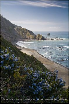 Northern California coast near Crescent City, Del Norte, California by Sean Bagshaw