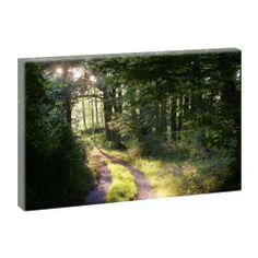 Kunstdruck auf Leinwand - Waldstimmung 100cm x 65cm von Querfarben, http://www.amazon.de/dp/B00G945452/ref=cm_sw_r_pi_dp_WZMVsb00TBR7D