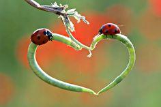 Ladybug ❤ Love