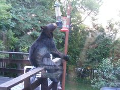 """""""Curiosity killed the bear""""? One thing is for sure, this guy is not afraid of losing his balance while munching on the birdseeds in our Squirrel Buster Bird Feeder. Have some pictures of your own? Click on the link and leave them on our Facebook wall!"""