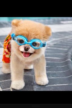 Boo!!  He loves to wear goggles like you!