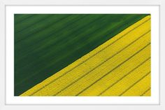 Green and Yellow Crops - Marmont Hill