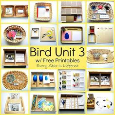 Every Star Is Different: Bird Unit 3 w/ Free Printables Best Picture For Montessori Activities at home For Your Taste You are looking for something, and it is going to tell you exactly what you are lo Montessori Science, Montessori Education, Montessori Classroom, Montessori Kindergarten, Montessori Toddler, Kindergarten Science, Spring Activities, Preschool Activities, Preschool Curriculum