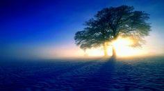 WINTER SUNLIGHT - Winter Wallpaper ID 1658127 - Desktop Nexus Nature