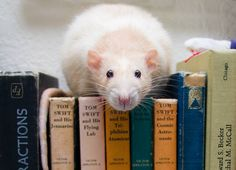read me a story mummy!
