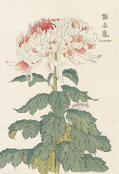 From vintage japanese woodblock prints art that inpires me! Japanese Watercolor, Japanese Painting, Chinese Painting, Japanese Illustration, Botanical Illustration, Arte Peculiar, Art Asiatique, Japan Art, Japan Japan