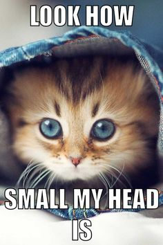 Soooooo funny yet cute