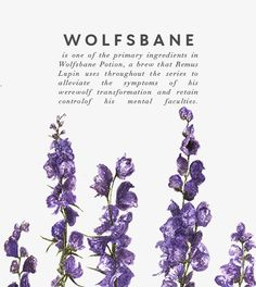 Wolfbane - flower potion that can kill - Wolfsbane, Harry Potter World, Healing Herbs, Medicinal Plants, Book Of Shadows, Herbal Medicine, Hogwarts, Herbalism, Nature