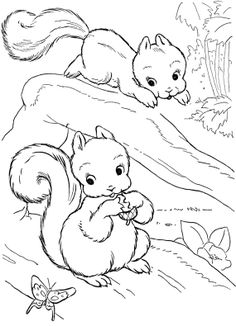 Baby Squirrel Coloring Pages