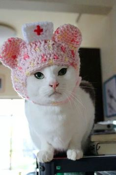 Smiles are free funny cats, cat hat и cats, kittens. Crazy Cat Lady, Crazy Cats, Cute Cats, Funny Cats, Nurse Cat, Cat Dressed Up, Cat Sweaters, Cat Hat, Cat Costumes