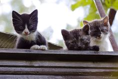 2014_06_16_1396 trio2 by heodes on Flickr.   http://cybergata.tumblr.com/