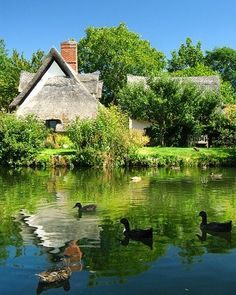 """An English Country Pond ~ With Ducks Swimming."""