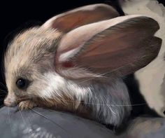 Long eared jerboa  The long-eared jerboa (Euchoreutes naso) is a nocturnal mouse-like rodent with a long tail, long hind legs for jumping, and exceptionally large ears. It is distinct enough that authorities consider it to be the only member of both its genus, Euchoreutes, and subfamily, Euchoreutinae.  Long-eared jerboas are found in the Palearctic ecozone. The specific palearctic ecozone areas they are found in are southernmost Mongolia to the Takla-Makan Desert, Mengxin, Aerijin…