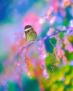 I Know A Place, Beautiful Pictures, Butterflies Flying, Butterfly, Lady Bugs, Our Planet, Mountain S, Dragonflies, Famous Quotes