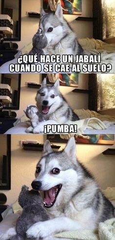 chistes contados por un perro husky - Buscar con Google