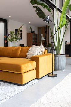 Lounge with your nearest and dearest on our luxury mustard sofa, ultra comfortable sofas! Jaw dropping vision of comfy thick cushions, bulky arms and stylish velvet fabric. Home Living Room, Living Room Decor, Sectional Sofa, Couch, Innovation Living, Interior Styling, Interior Design, Types Of Sofas, Comfortable Sofa