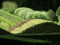 Veddw House Garden, Monmouthshire, UK. Form and texture, light and shade.