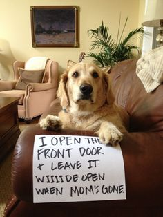 """I open the front door and leave it wiiiide open when Mom's gone."" ~ Dog Shaming shame - Golden Opportunity"