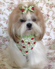Olá, AUmiguinhos!!!  BAUm domingo para todos AUcês! Tenhamos todos uma semana de Paz!  #lacinh - lacinhoparacachorro Animals For Kids, Animals And Pets, Pet Spa, Pet Supplements, Girl And Dog, Dog Costumes, Dog Sweaters, Baby Puppies, Dog Dresses