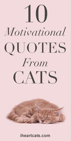 10 Motivational Quotes From Cats