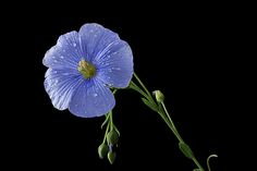 BLUE by Vendenis