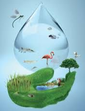 Image result for poster on world water day