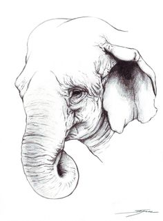 Hindu Elephant Drawing | Elephant Indian Drawing Indian Elephant Pencil by