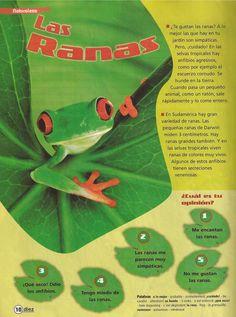 Las ranas Bilingual Classroom, Spanish Classroom, Spanish Teacher, Teaching Spanish, Amphibians, Reptiles, Animal Classification, Dual Language, Mundo Animal