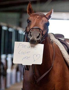 Please Love Me! There are to many horses going to auction and slaughter! Please do not take in a horse if you cant afford it or love it. This is true for any animal. Funny Horses, Cute Horses, Horse Love, Baby Horses, All The Pretty Horses, Beautiful Horses, Animals Beautiful, Cute Baby Animals, Funny Animals