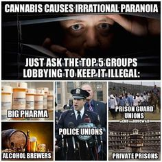 TheAntiMedia.org News by people, not corporations  #cannabis #cannabiscommunity #cannabisculture #medicalmarijuana #medicalcannabis #bigpharma #prision #union #dispensary #drugdealer #drugwar #druglord #police #policestate #paraniod #endthedrugwar #drink #drinks #drinking #drinkspecials #highlife #high #dab #dabs #dabsrus #dabstagram #dabsallday #wax #pharmacy #medical