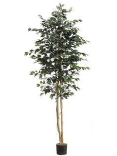 8' Ficus Tree w/1512 Leaves in Pot Green (Pack of 2) *** For more information, visit image link.