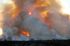 Brush Fire-Traci Felsot Photography