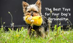 The Best Toys for Your Dog's Personality – Project Pawsitivity Dog Care, Dog Toys, Your Dog, Personality, Best Friends, Cute Animals, Good Things, Pets, Fun
