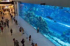 Home Aquarium, Aquarium Design, Tanked Aquariums, Zoos, Fish Tanks, Aquascaping, Terrariums, Goldfish, Dreamworks