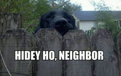 #labrador funny. Reminds me of something my puppy would do