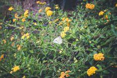 A batterfly in Giardini delle Gole di Alcantara Sicily (Italy)  #travelgram #thegoodlife #vacaymode #traveltips #travelfriendly #wheretonext #girlwhotravels #nature  #travel #picoftheday #photooftheday #instagood #italy #love #sky #trip #beautiful #tourism #holiday #batterfly  #photography  #garden  #instatravel #naturephotography