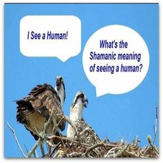 I see a Human? What's the Shamanic Meaning of seeing a human? Love And Light, Light In The Dark, Power Animal, Spiritual Development, Animal Totems, You Funny, Animal Memes, I Laughed, Meant To Be