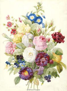 Bouquet of flowers, watercolor on vellum by Pierre-Joseph Redouté (1759-1840).