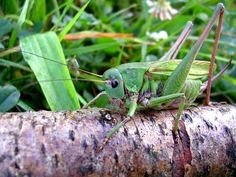 The Natural Way to Get Bugs & Grasshoppers to Stop Eating Outdoor Plants