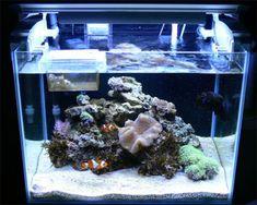 saltwater aquarium setup | ... Hobbyist Guide: Setting up a Nano Reef Aquarium :: Aquarium Domain.com
